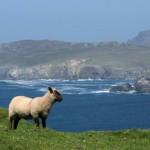 Oportunidade Bacana: Giddy Goats Tours