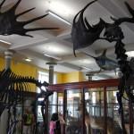 Conhecendo a Irlanda: Natural History Museum