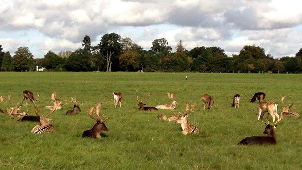 Conhecendo a Irlanda: Cervos